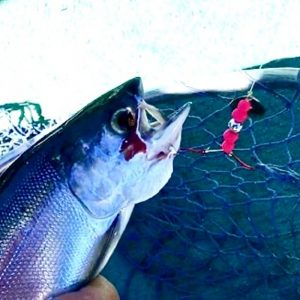 "/""RED Bandit/"" UV Montana Tackle Kokanee Salmon UV Spinner-Hoochies 2"